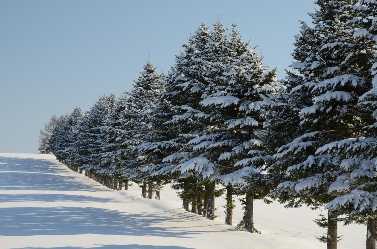 大空町の冬景   ひがし北海道で・・・今日は何すっかな?