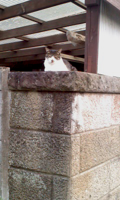 猫オンザ塀