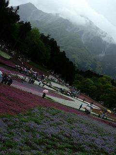 芝桜の丘から見える雲に覆われた武甲山