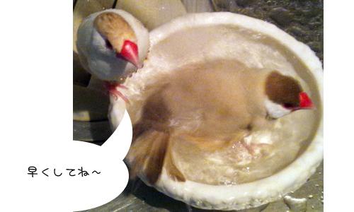 水浴び_1