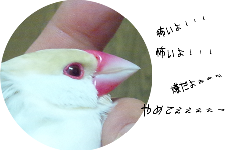 爪切りの悲鳴_1