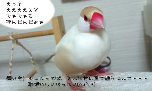 甘え鳴き_2.jpg