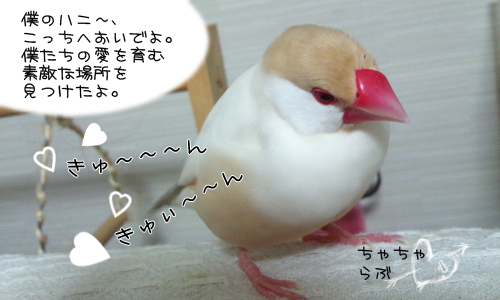 甘え鳴き_1.jpg