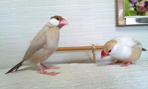 続・別居生活_1
