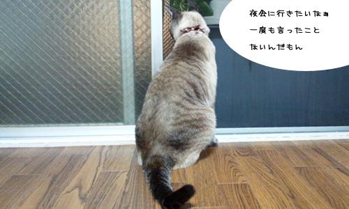 文鳥plus猫_6