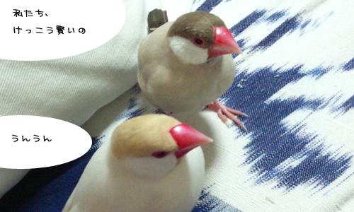 鳥のトリビア的な_1