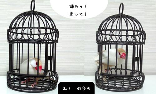 小鳥ブーム?_5