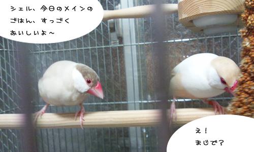ちゃちゃの作戦_4