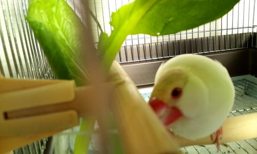 小松菜の葉陰で_2