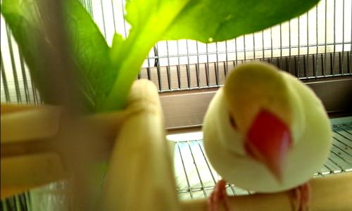 小松菜の葉陰で_1