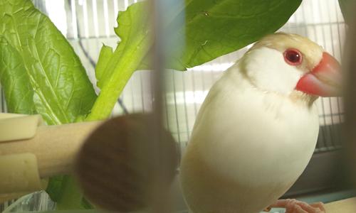 小松菜の葉陰で_3