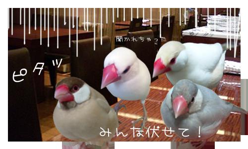 文鳥たちのオフ会_5