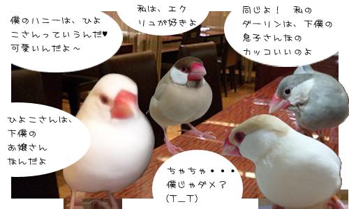 文鳥たちのオフ会_2