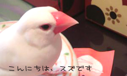 文鳥友達のブログと姫