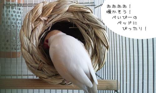 つぼ巣_1