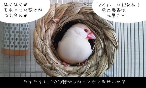 つぼ巣_3