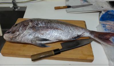 鯛ラバ釣果