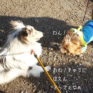 DSC08879.jpg