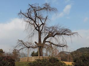 H26円山公園blog01