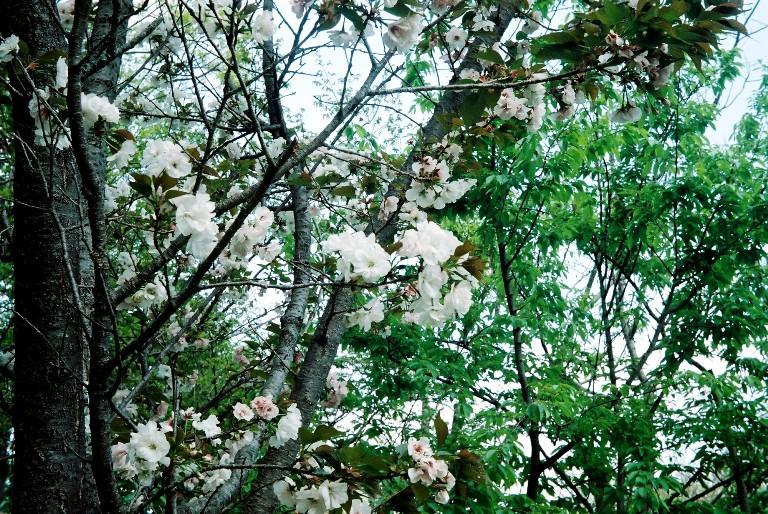 gardenpark2012-04-19-005