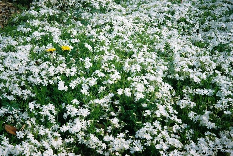 gardenpark2012-04-19-020