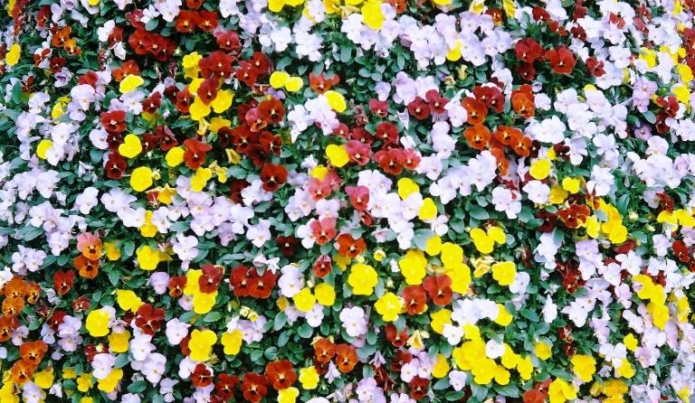 gardenpark2012-04-19-024