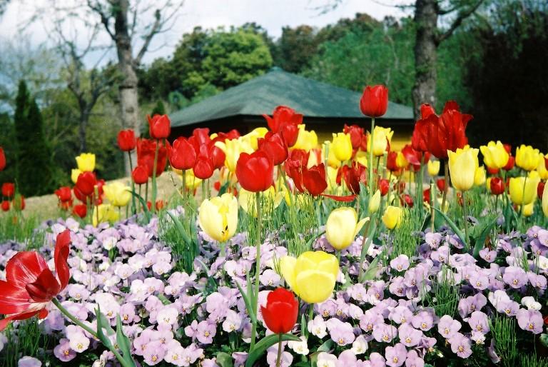 gardenpark2012-04-19-026
