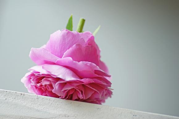バラの果物