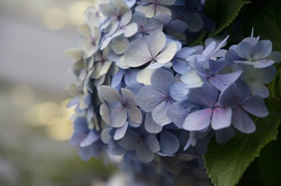 街に溶け込む花