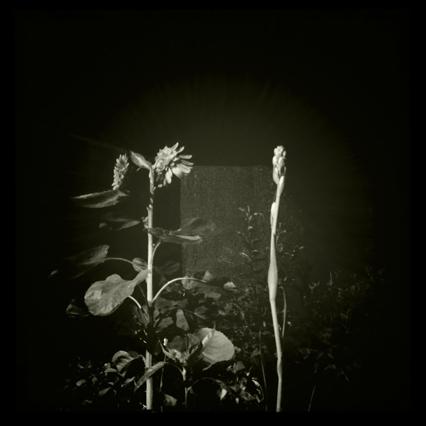 向日葵のある夜