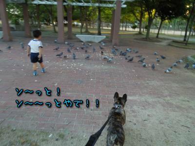 20121010115559.jpg