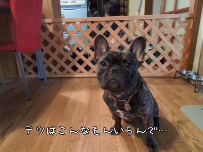 BUNu86aFijiokuS.jpg