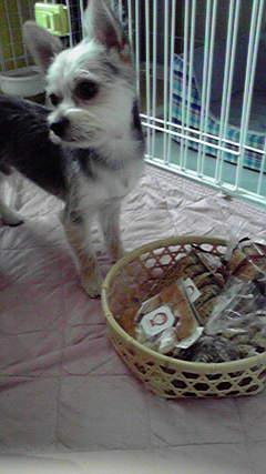 籠とクッキー20120728095