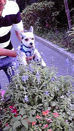 花々と201208260705