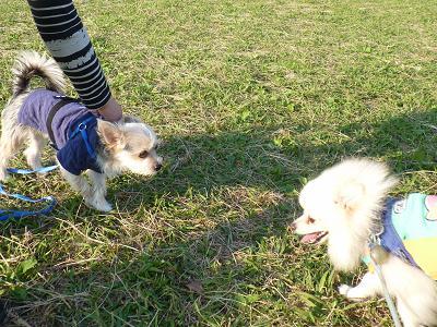 犬道 つむと対決 20121107