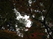 032_20121202191148.jpg
