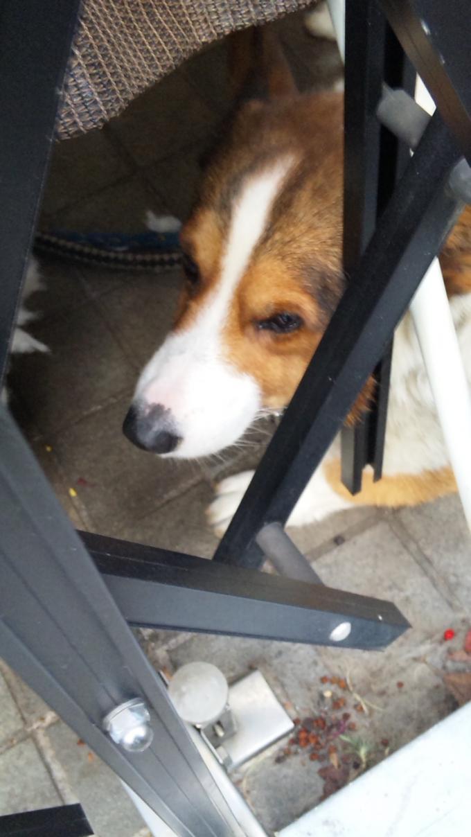 DOG_20121115