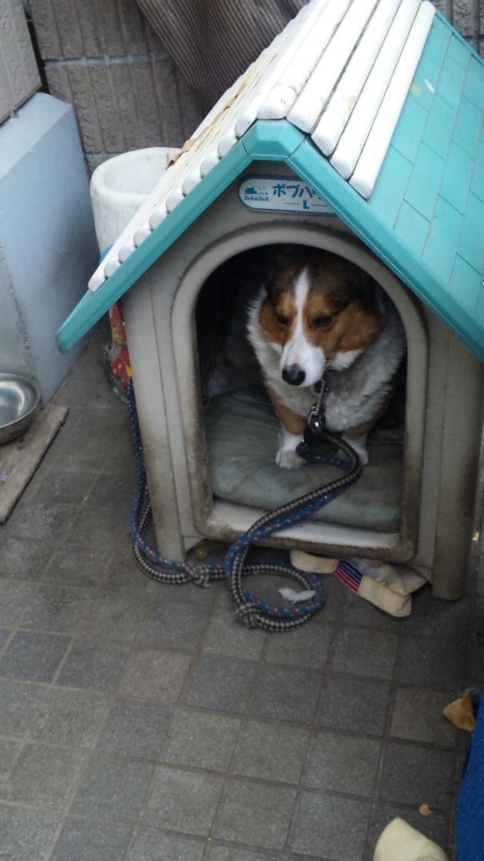 DOG_20121217