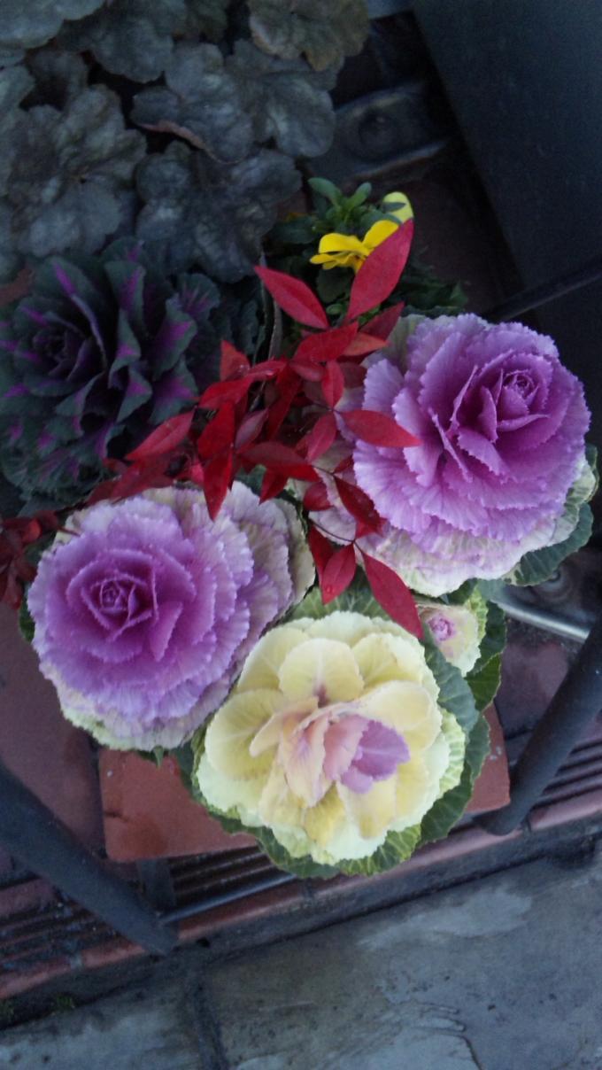 FLOWER_20130218