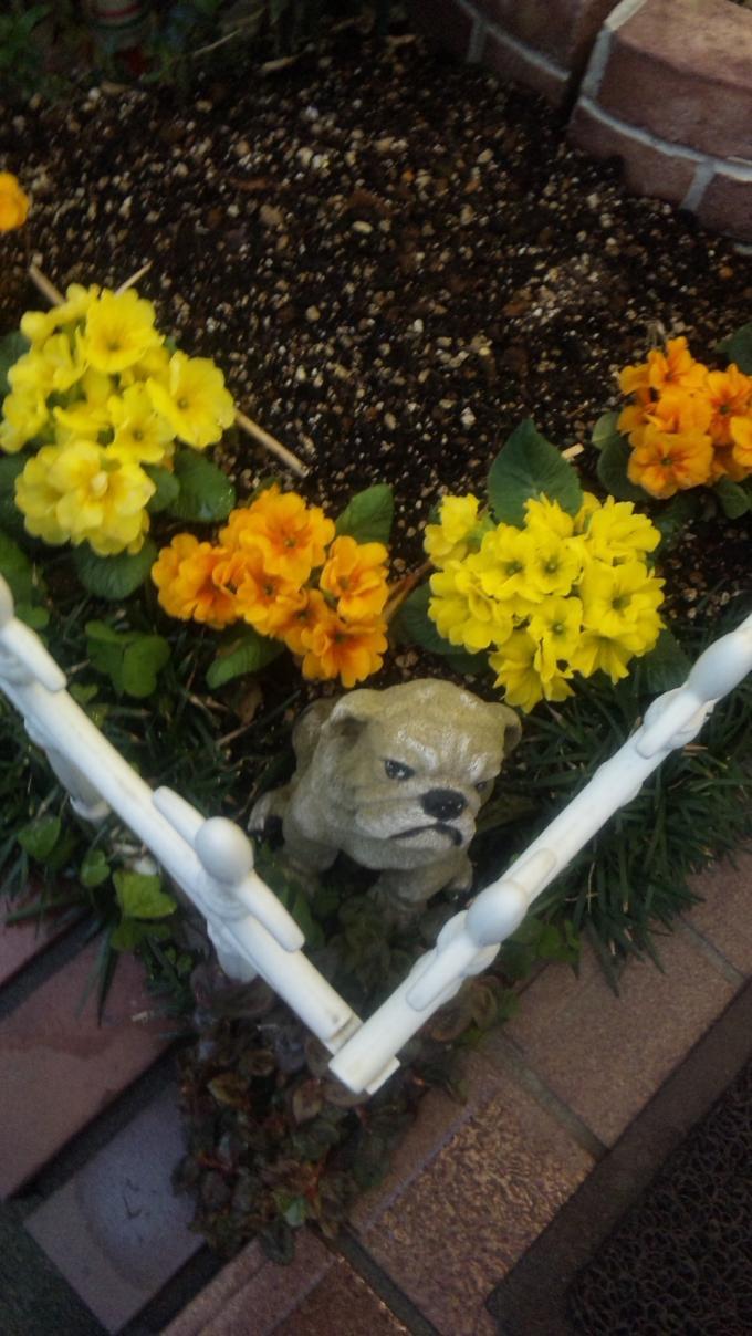 FLOWER_20130219