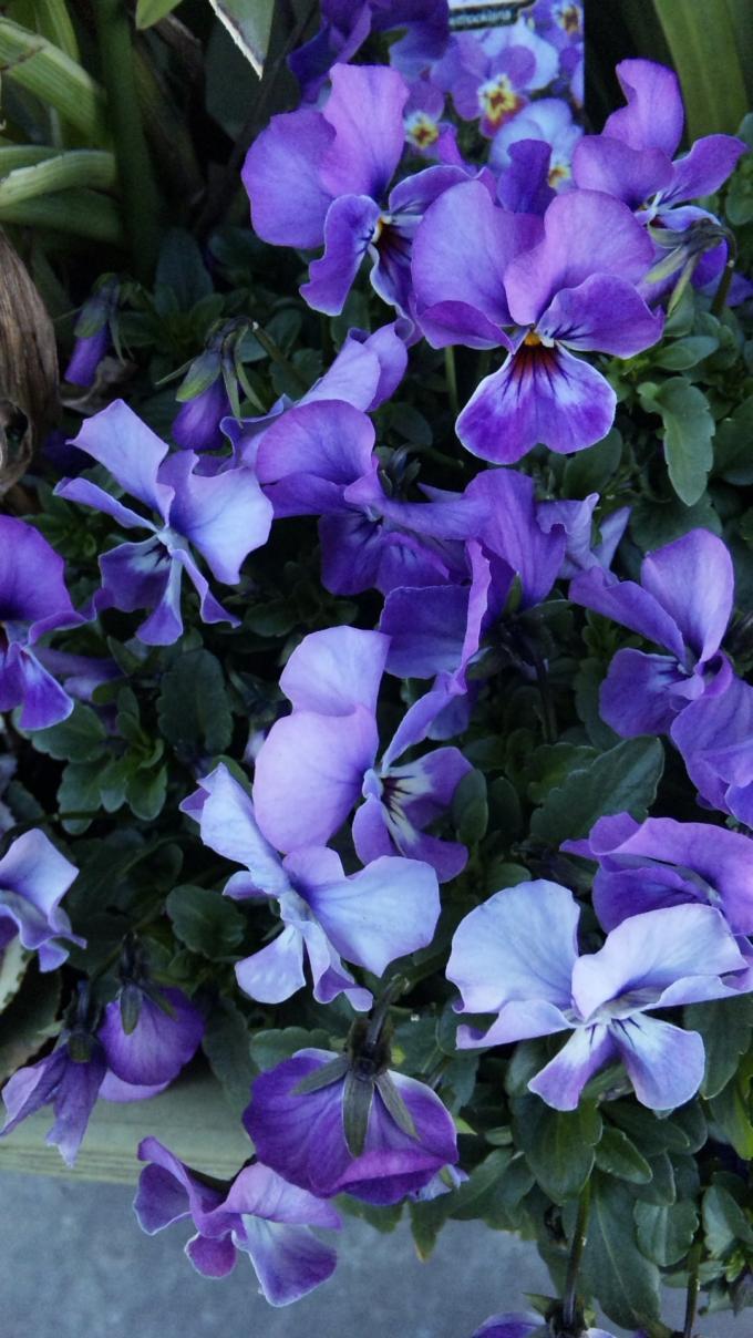FLOWER_20130220