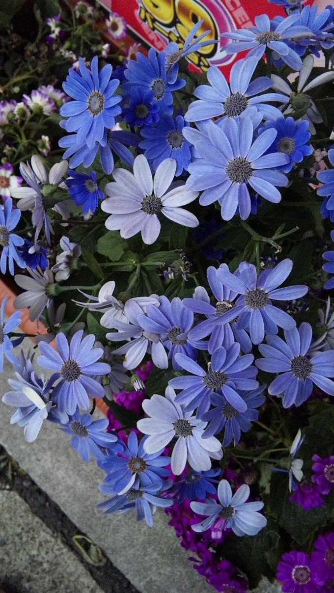FLOWER_20130305