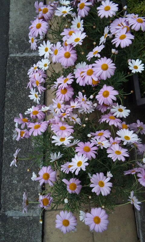 FLOWER_20130306