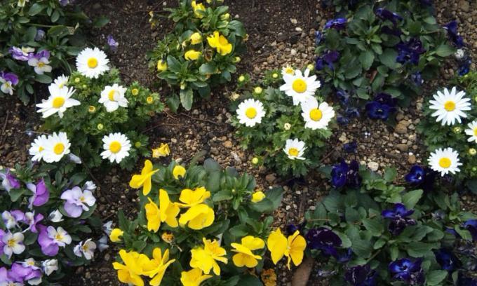 FLOWER_20130307