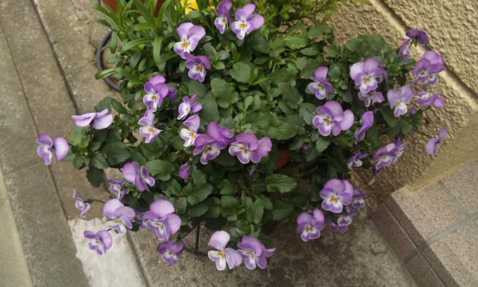 FLOWER_20130310