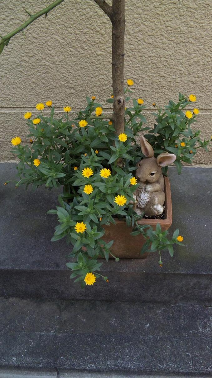 FLOWER_20130313