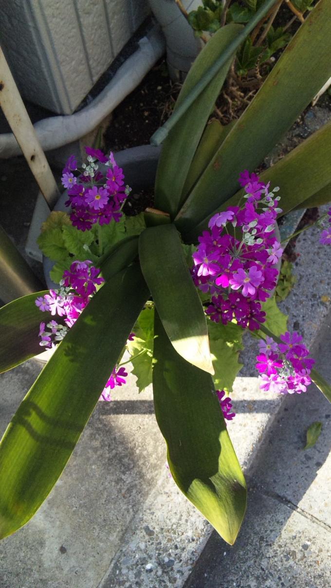 FLOWER_20130309