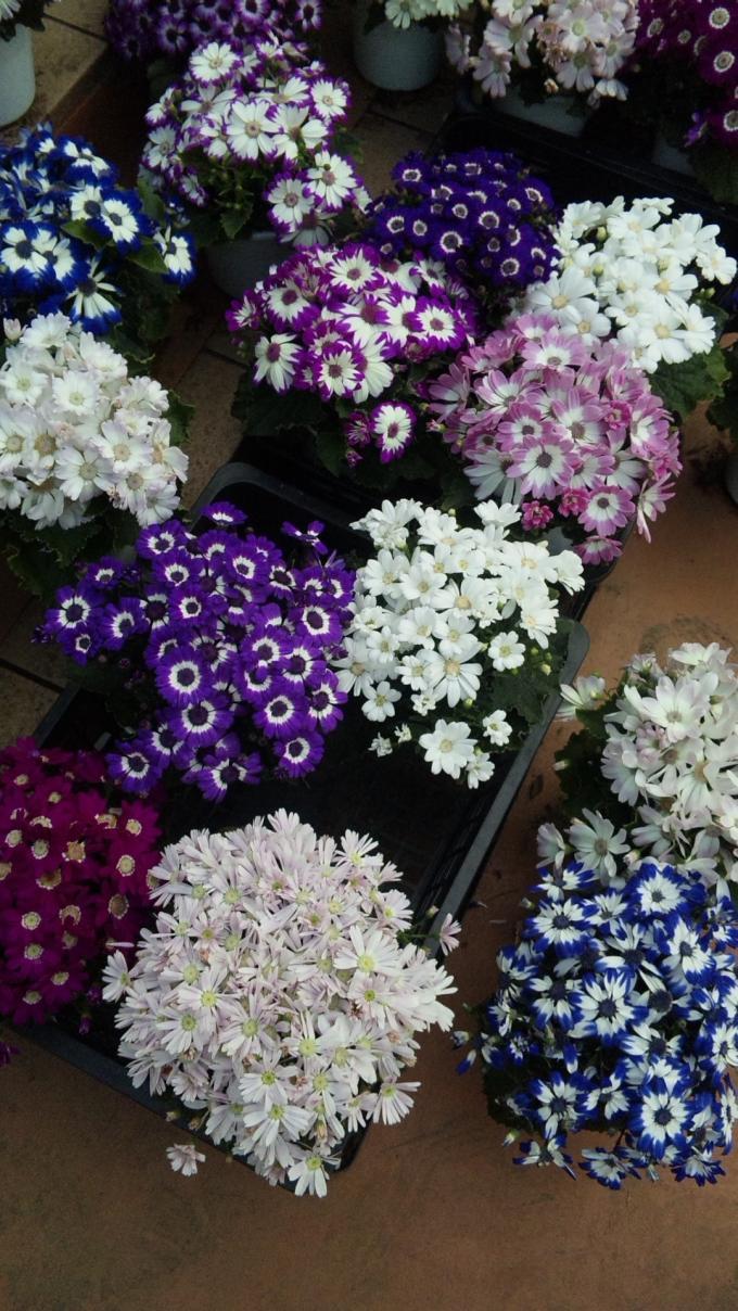 FLOWER_20130314