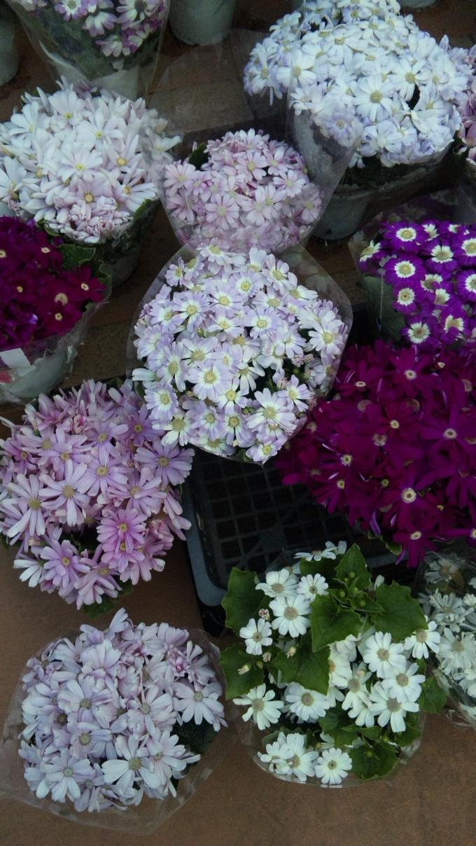 FLOWER_20130315