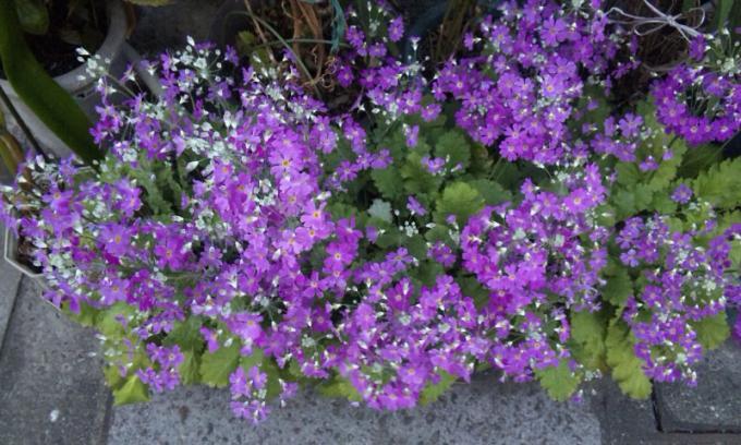 FLOWER_20130318